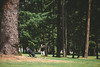 2014_05_28 State Golf-40