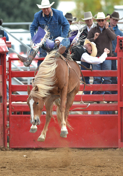 Bud Denega   The Sheridan Press<br /> Sheridan College's Cole Reiner competes in bareback during the Pat Hamilton Memorial Rodeo at the Sheridan County Fairgrounds Sunday, Sept. 23, 2018. Reiner's 84-point short-round ride earned him the top spot.