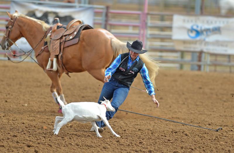 Bud Denega   The Sheridan Press<br /> Sunday's action began with goat tying.
