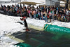 20080419_dtepper_pond_skimming_01_DSC_0121