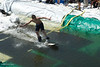 20080419_dtepper_pond_skimming_01_DSC_0157