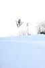 IMG_2711Snowflake Ski club 2014