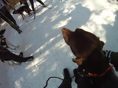 Ottawa Fun Race 2012 5 km Skijor