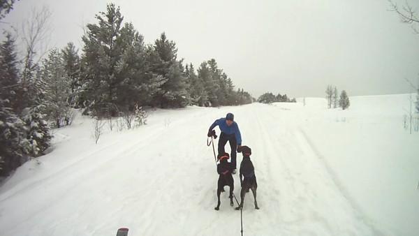 Skijoring Videos