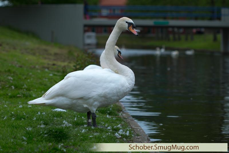 boat trip Almere_R7A9875