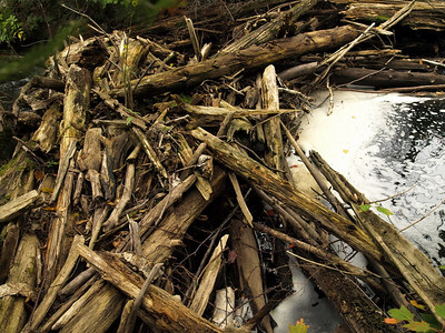 Log jam in outlet from Snowbank to Boot Lake.  Here is where I sunk in water last Thanksgiving weekend up to my thigh on water.   Back then the temperature was 22 deg F (see album at www.bwac.smugmug.com).  This time I crossed safely.