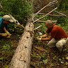 USFS tools were in excellent condition.  Sharp crosscut saw made sawdust in no time.