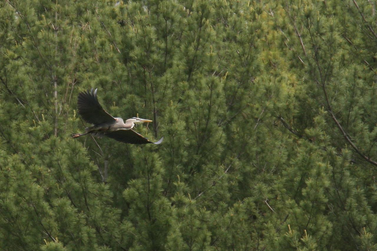 IMG4_18554 flying bird COE Soccer trmzb