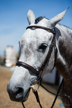"Sonoma Horse Park ""Horse & Hound"""