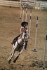 Southern-Pride-Youth-Rodeo-11-05-2005-027