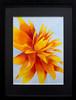 092 Lemak-La Fleur de Giverny