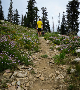 Back up to Sinner's Pass through wildflowers.