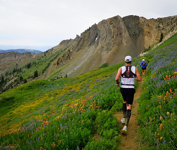 Descending into a sea of wildflowers in Mineral Basin.