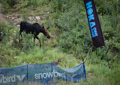 Even the moose plans to beat me.  Photo:  Dondi.