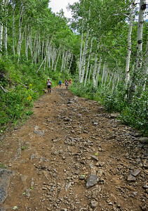 Rocky road and huge aspens up, up, and up out of Pacific Mine.