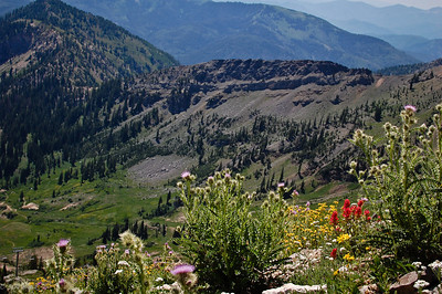 Wildflowers against Sinner's Pass, on the course tomorrow.  Photo:  Dondi