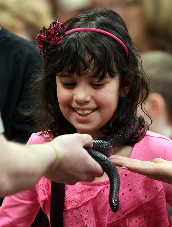 Peabody: Catherine Francis, 8, of Andover smiles nervously as a snake from Curious Creatures was place around her neck at Brooksby Village on Friday afternoon. David Le/Salem News