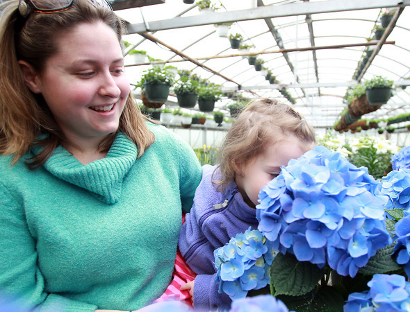 Beverly: Bethany Mullen, of Beverly, holds her daughter Emma, 1 1/2, as she smells a hydragea at The Leonhards' Florist and Garden Center on Friday afternoon. David Le/Salem News