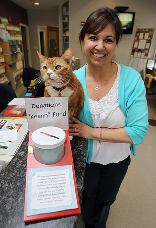"""Peabody: Donna DiMare, Office Manager at Northeast Veterinary Hospital on Lowell St. in Peabody holds Skippy, the house cat of the clinic next to a jar for donations to the """"Keeno"""" Fund. David Le/Salem News"""
