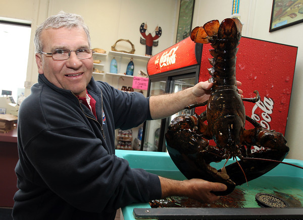 Danvers: Darryl Parker, owner of the Cherry Street Fish Market holds up a 12-pound lobster inside his store on Monday morning. Cherry Street Fish Market celebrated its 30th year this January. David Le/Salem News