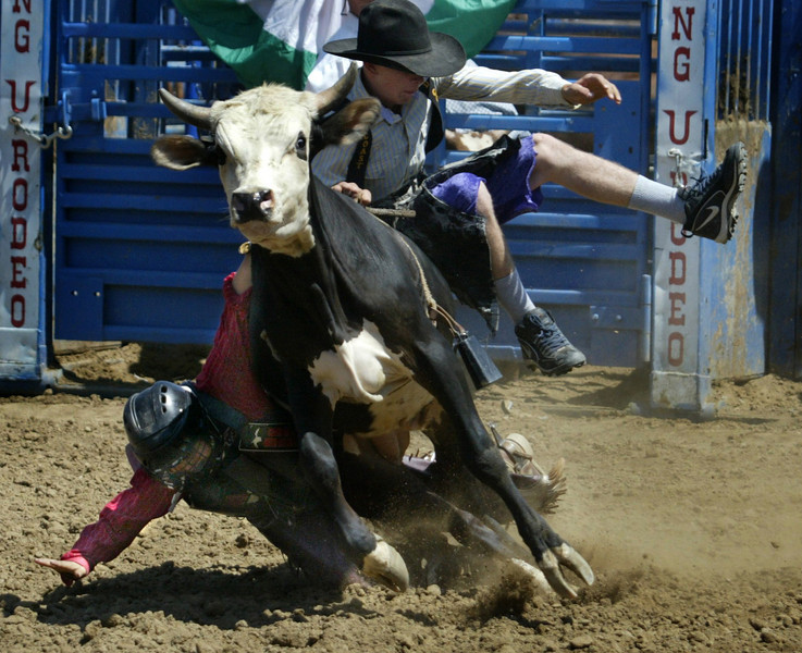 12 year-old Sam Woody of Mira Loma takes a takes a fall and is semi-crushed from a bull as Cory Ridens jumps in to help distract the bull.  This occurred during the Junior Division of the Calf Riders during the last day of the Orange County Fair in Costa Mesa. He was not injured and walked off with the help of  several others.