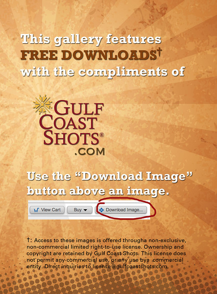 This gallery offers free downloads with the compliments of GulfCoastShots.com. Access to these images is offered througha non-exclusive, non-commercial, limited, right-to-use license. Ownership and copyright are retained by Gulf Coast Shots. This license does not permit any commercial use, or any use by a commercial entity. Direct inquiries to license@gulfcoastshots.com.
