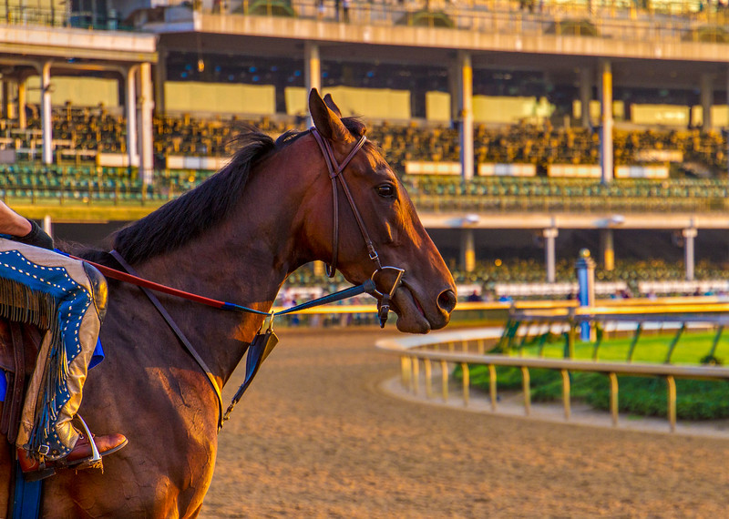Sunrise Workout at Churchill Downs