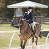Rider: Kathryne Richard<br /> Horse: Hattrick<br /> School: Sweet Briar College