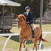 Rider: Liz Koslow<br /> Horse: Chase N' Gold<br /> School: Sweet Briar College