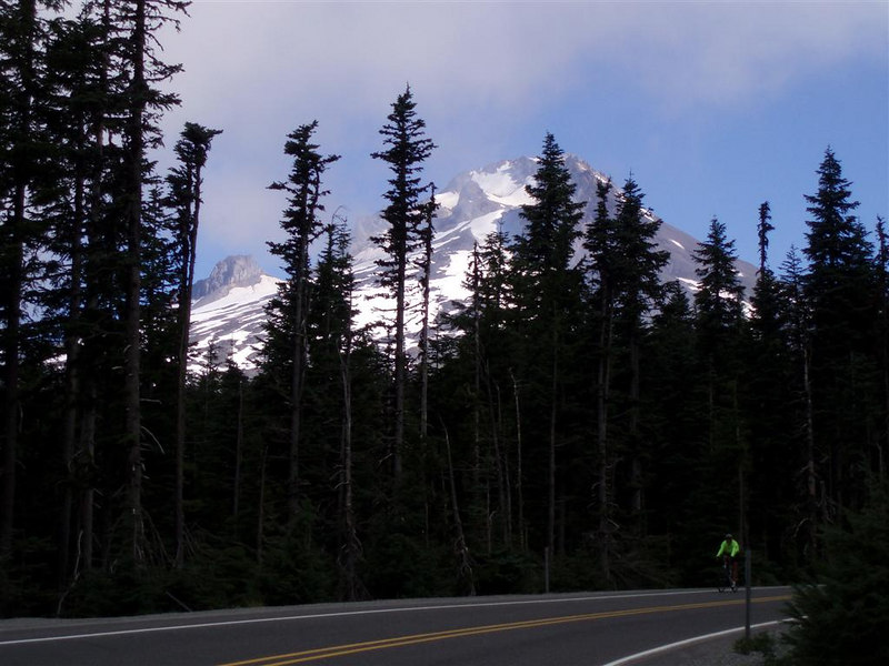 Mount Hood teases through the trees