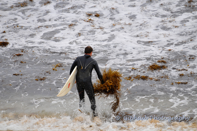 Surfer in seaweed