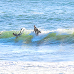 10-13-20 Surf Sewers with friends-18