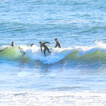 10-13-20 Surf Sewers with friends-19