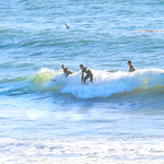 10-13-20 Surf Sewers with friends-20