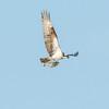 Surfing Long Beach 9-17-12-1268