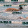 SAM HOUSEHOLDER   THE GOSHEN NEWS<br /> Wawasee sophomore Logan Brugh swims during the 200 yard freestyle Thursday during the Boys Swimming Sectional Preliminaries at Northridge High School.