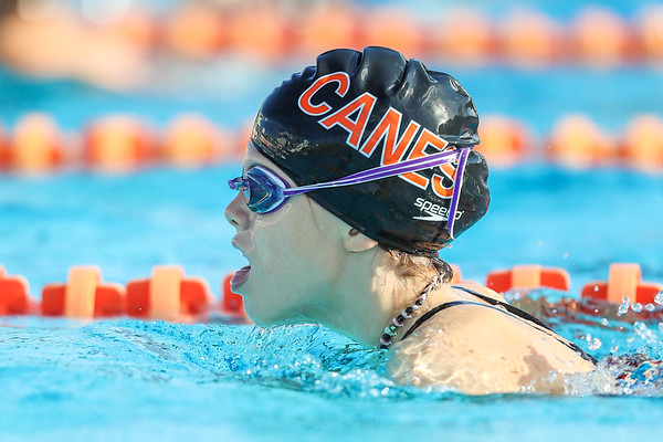 Canes Swimming, 2018