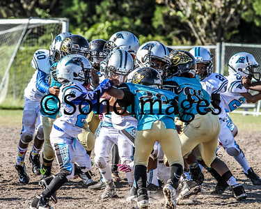 TBYFL PeeWee Panthers Vs. Jaguars 2nd Round