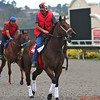 Early Morning at Del Mar Racetrack