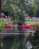 I think they comb the grass. Masters 2015
