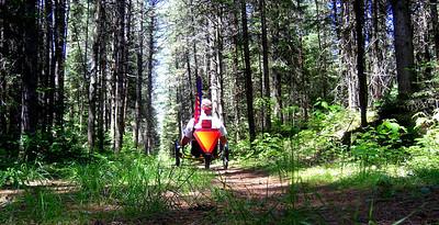 Bdale Trail, june 20, 2013 CIMG8825