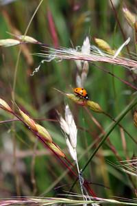 Ladybug spectator