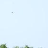 Seminole Inv 186