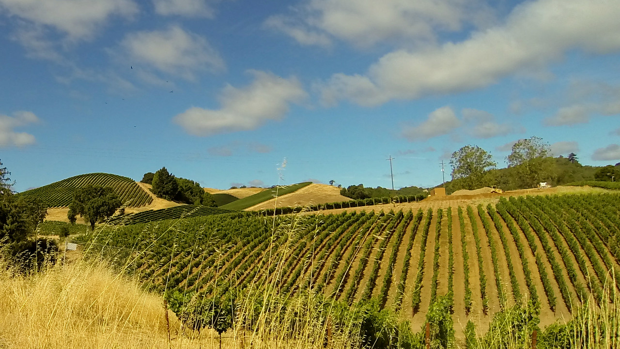 This may be the BEST shot of Wine Country!