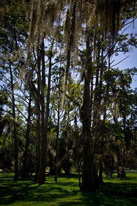 Green grass, tall trees, and hanging moss... Louisiana