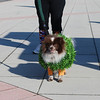 Trick or Trot 2011 Dog Walk and Costumes 013