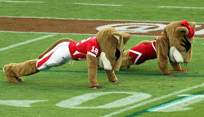 Uh mascots Shasta and Sasha doing victory pushups