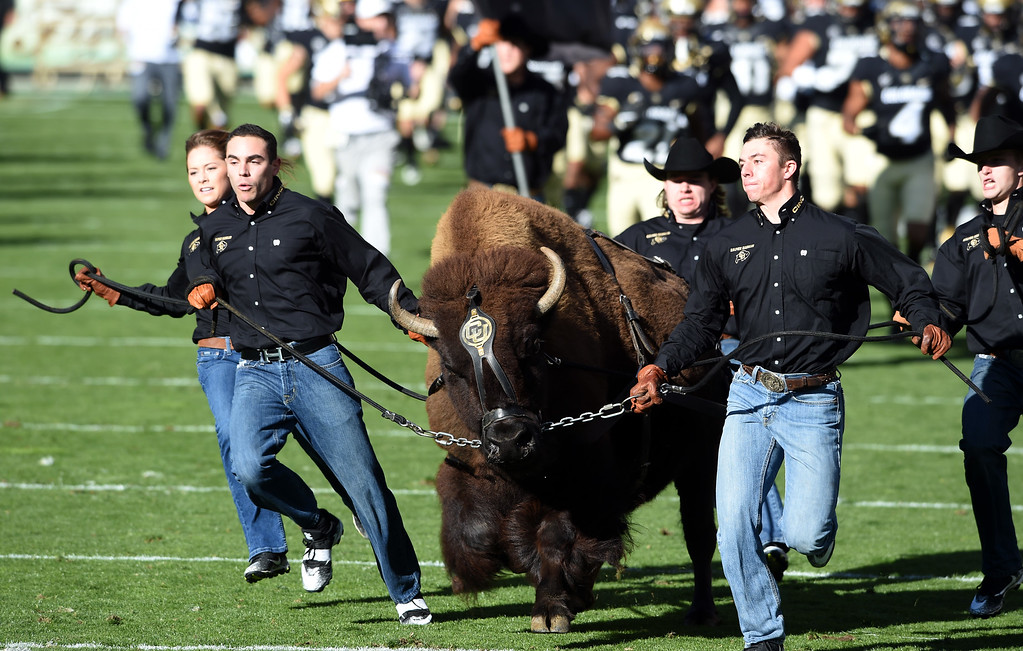 . Here comes Ralphie during the November 11th, 2017 game in Boulder.  Cliff Grassmick / Staff Photographer/ November 11, 2017, 2017