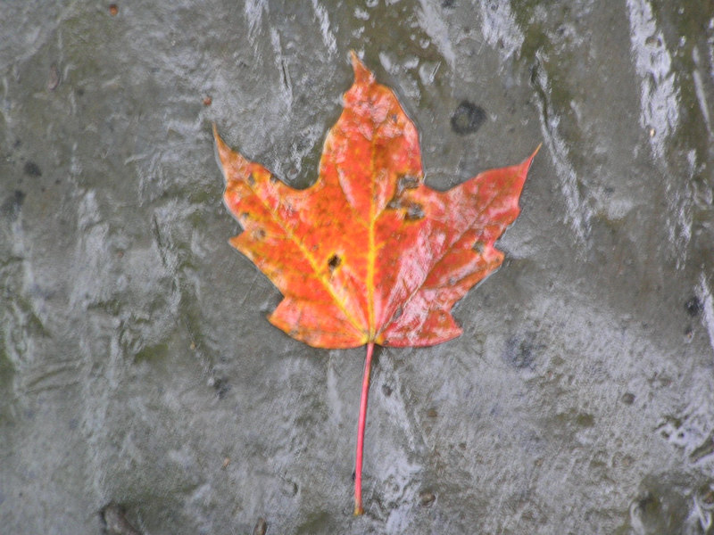 Pretty fall leaf