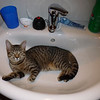 Day 0: the farm cat in my sink